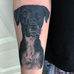 Tattoomotiv Eines Hundekopfes In Black And Grey
